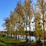 Donauufer bei der Lobau