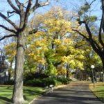 Herbst im Matznerpark